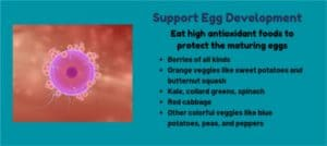 Using foods to support egg development to increase IVF success rates